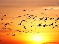 Il canto degli uccelli nella musica classica